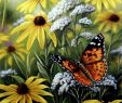Le Jardin Des Papillons Génial Rosemary Millette Painted Lady butterfly