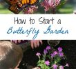 Le Jardin Des Papillons Inspirant Tips and Resources for Starting A Small butterfly Garden at