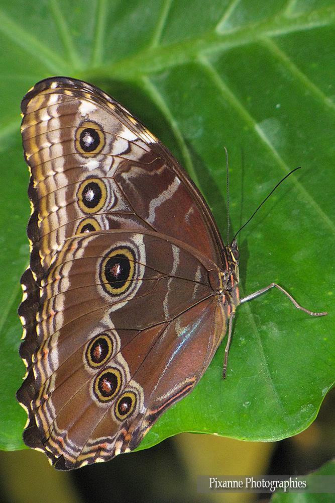 Alsace Hunawihr Jardin des papillons 02
