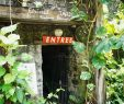 Le Jardin Des Papillons Luxe Martinique