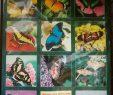 Le Jardin Des Papillons Nouveau Jardin Des Papillons Travel Guidebook –must Visit