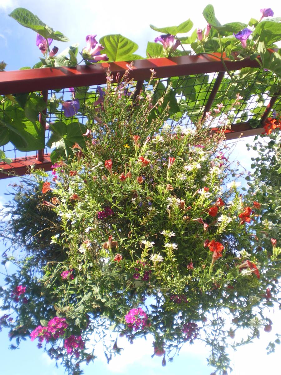 jardin des papillons exotiques hunawihr