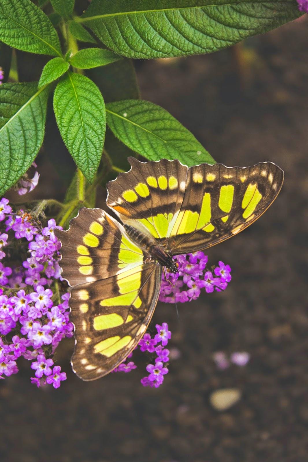 le jardin des papillons luxembourg %