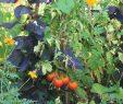 Lutter Contre Les Fourmis Au Jardin Best Of Un Potager Bio Facile  Cultiver Les Conseils De Jardin De