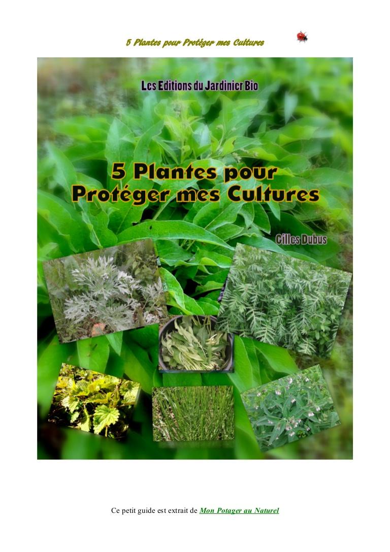 Lutter Contre Les Fourmis Au Jardin Charmant 5 Plantes Pour Protéger Mes Cultures