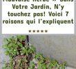 Lutter Contre Les Fourmis Au Jardin Charmant épinglé Sur Jardin