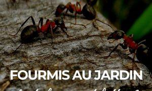 51 Unique Lutter Contre Les Fourmis Au Jardin