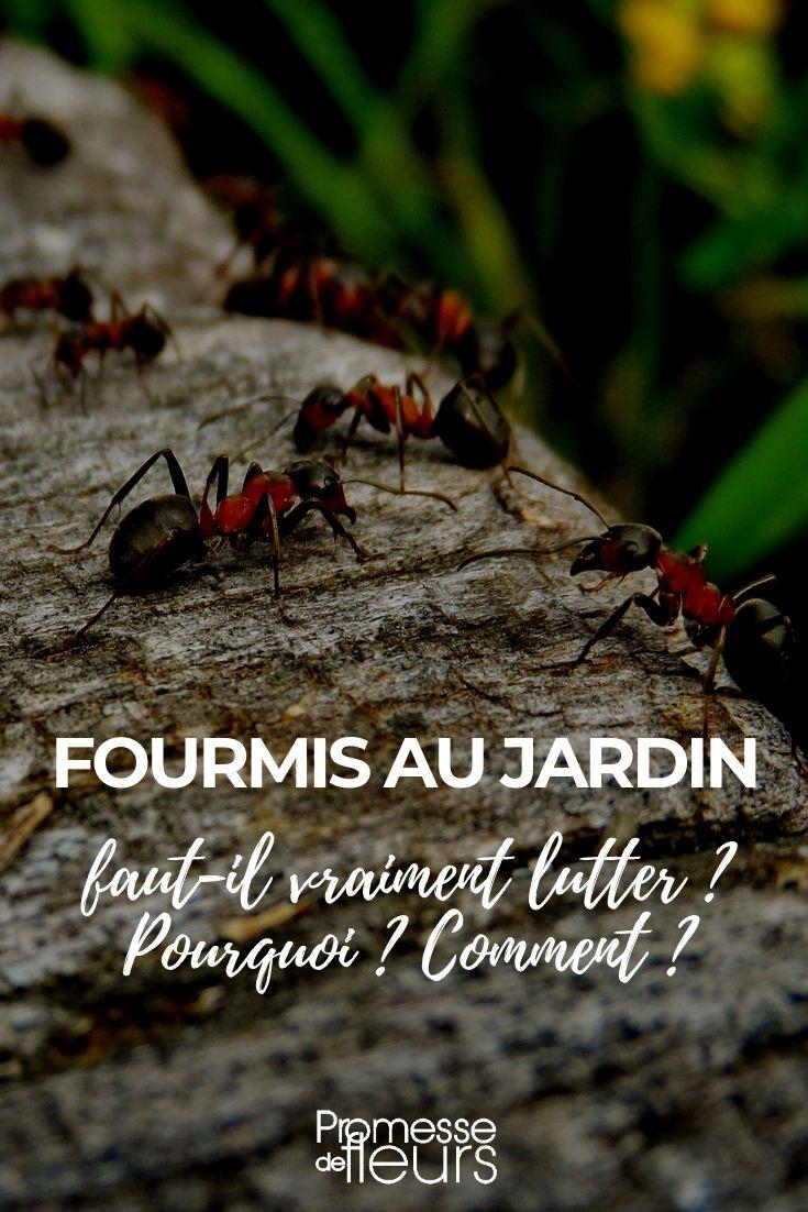Lutter Contre Les Fourmis Au Jardin Charmant Fourmis Au Jardin Faut Il Lutter Pourquoi Ment