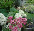 Lutter Contre Les Fourmis Au Jardin Charmant Le Pagnonage Au Jardin Bio