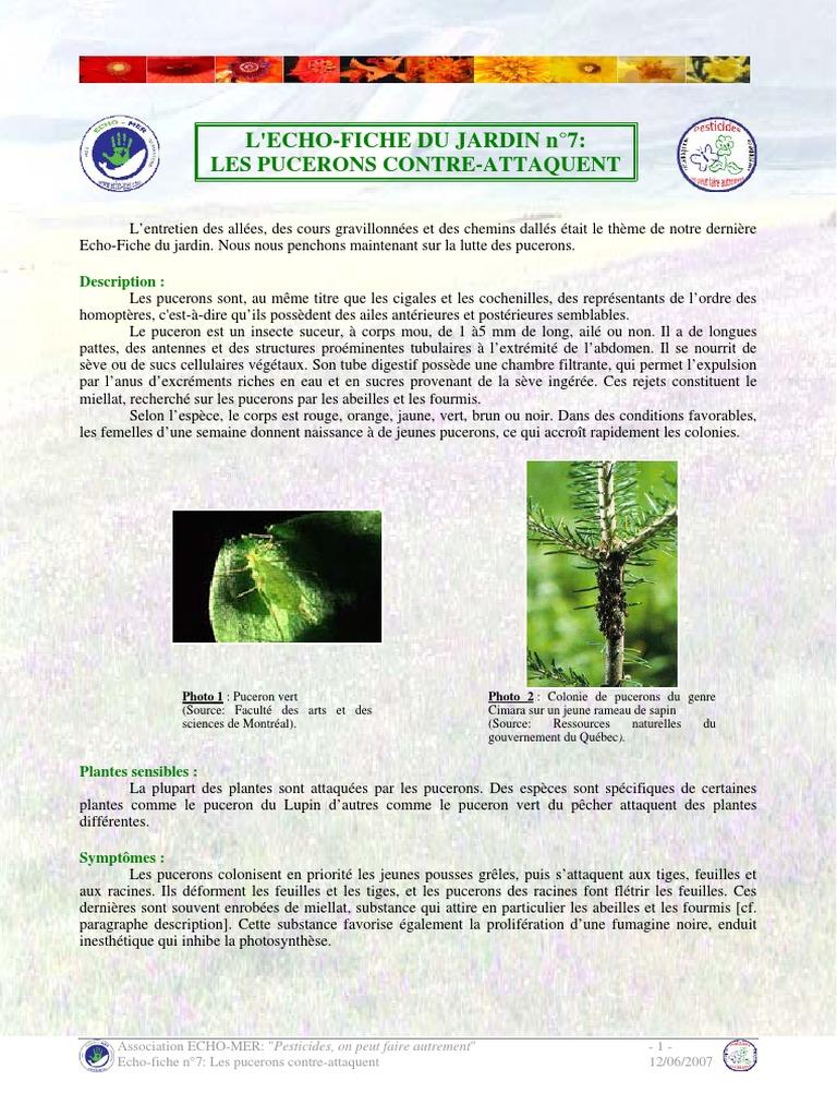 Lutter Contre Les Fourmis Au Jardin Frais Echo Fiche 7 Les Pucerons Pdf Lutte Biologique