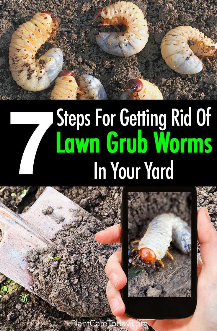 Lutter Contre Les Fourmis Au Jardin Frais Lawn Grub Worm Control 10 Ways to Get Rid Grub Worms