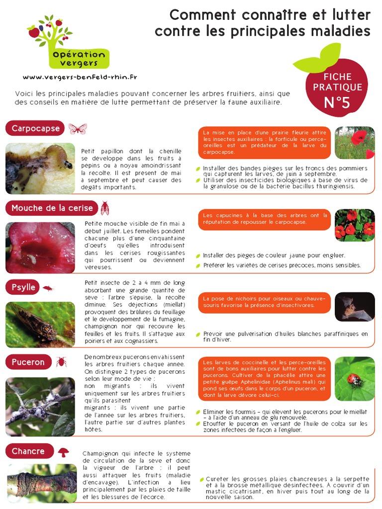 Lutter Contre Les Fourmis Au Jardin Frais Ment Connaitre Et Lutter Contre Les Principales Mala S