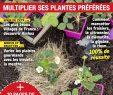 """Lutter Contre Les Fourmis Au Jardin Luxe Alain Delavie On Twitter """"chaque Semaine Dans Le Magazine"""