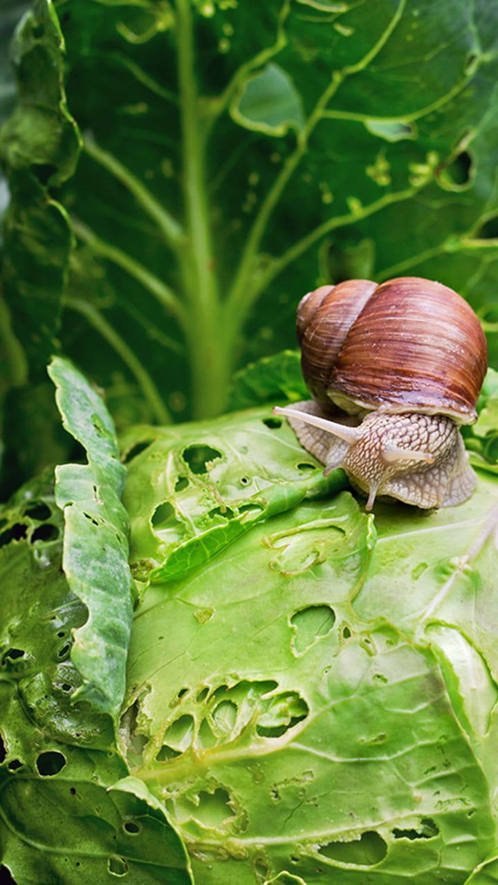 Lutter Contre Les Fourmis Au Jardin Luxe Des Rem¨des Naturels Pour Lutter Contre Les Nuisibles Du Jardin