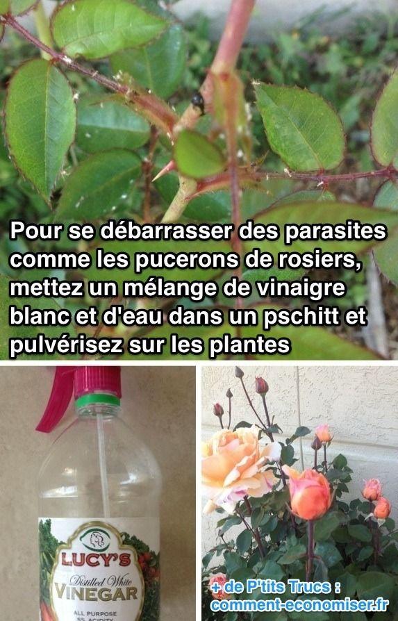 Lutter Contre Les Fourmis Au Jardin Nouveau L Insecticide Naturel Que tous Les Jardiniers Devraient