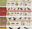 Nourrir Les Oiseaux Du Jardin Beau Bien Nourrir Les Oiseaux En Hiver Randonnée Pédestre En