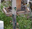 """Nourrir Les Oiseaux Du Jardin Frais andré Arcadio Fuster On Twitter """" Partir Du 20 Mars Les"""